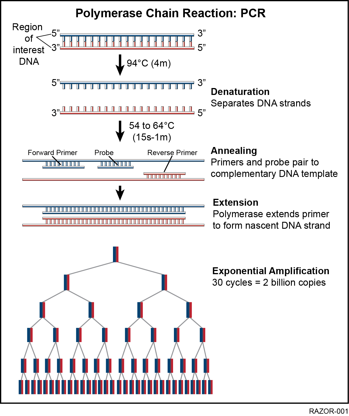 Polymerase Chain Reaction (PCR) Technology
