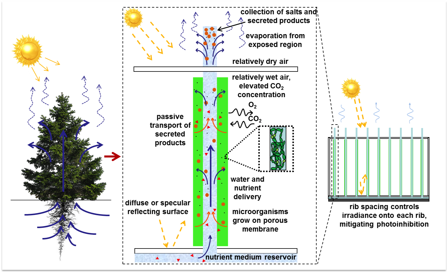 "By utilizing evaporation and capillary forces, the SABR, or ""synthetic tree,"" mimics the natural process of transpiration in higher plants."