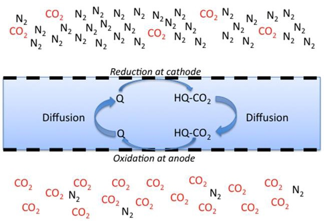 CO2 is transported from a low concentration (cathode side) to a high concentration (anode side) by reaction with an electrochemically active carrier. CO2 is bound to a reduced form of the carrier, and is released when the carrier is oxidized.