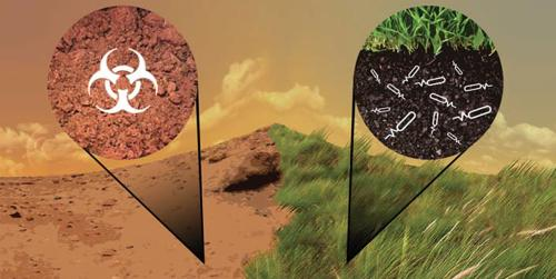 A Synthetic Biology Architecture to Detoxify and Enrich Mars Soil for Agriculture